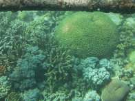 Great Barrier Reef - underwater image of coral